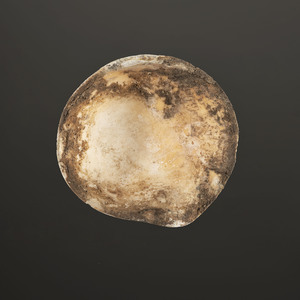 A Shell Gorget, 4-1/8 in.