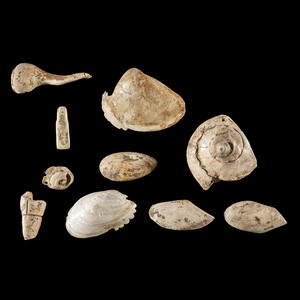 A Frame of Ten Shell Items, Largest 4-3/4 in.