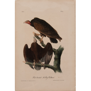 Audubon The Birds of America Royal Octavo Edition Lithographs, Lot of Six
