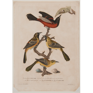 Alexander Wilson American Ornithology Lithographs, Lot of Three