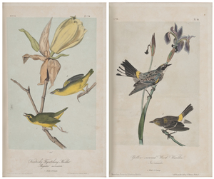 The Birds of America by John James Audubon